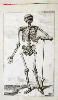 photo credit: Skeleton - French anatomical engraving via photopin (license)