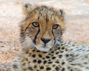 photo credit: Tambako the Jaguar via photopin cc