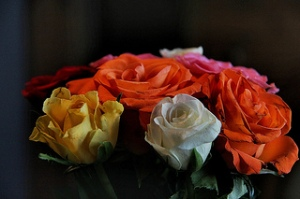 photo credit: Colorful Roses via photopin (license)