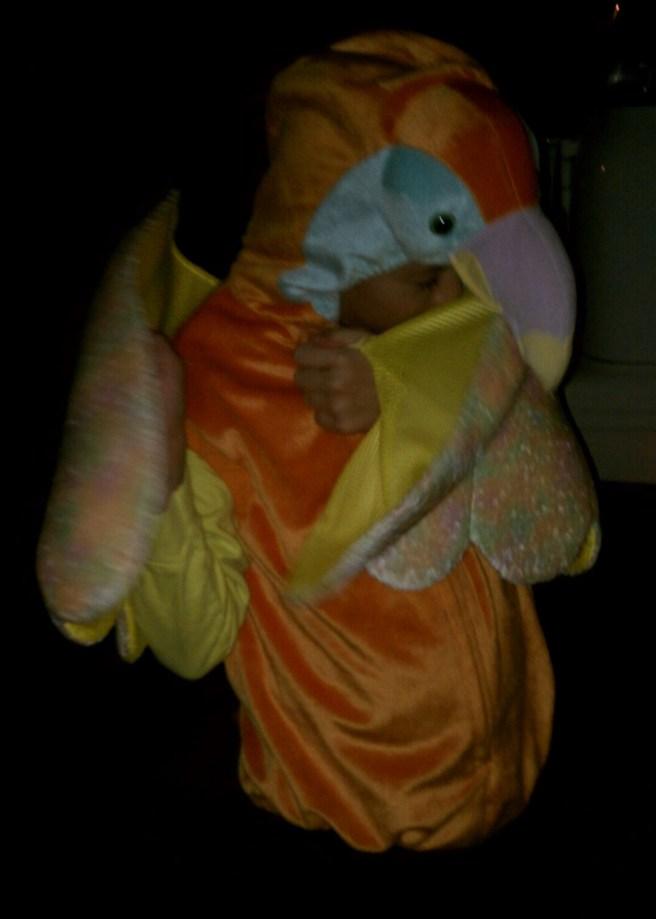toucan1 crop