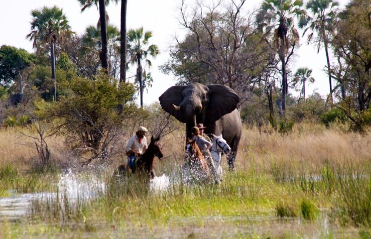 Equitrekking's Botswana Episodes