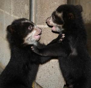 photo credit: Smithsonian's National Zoo via photopin cc