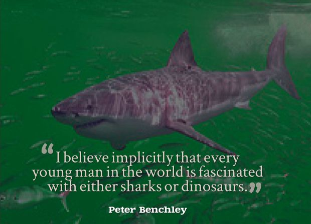 new shark quote