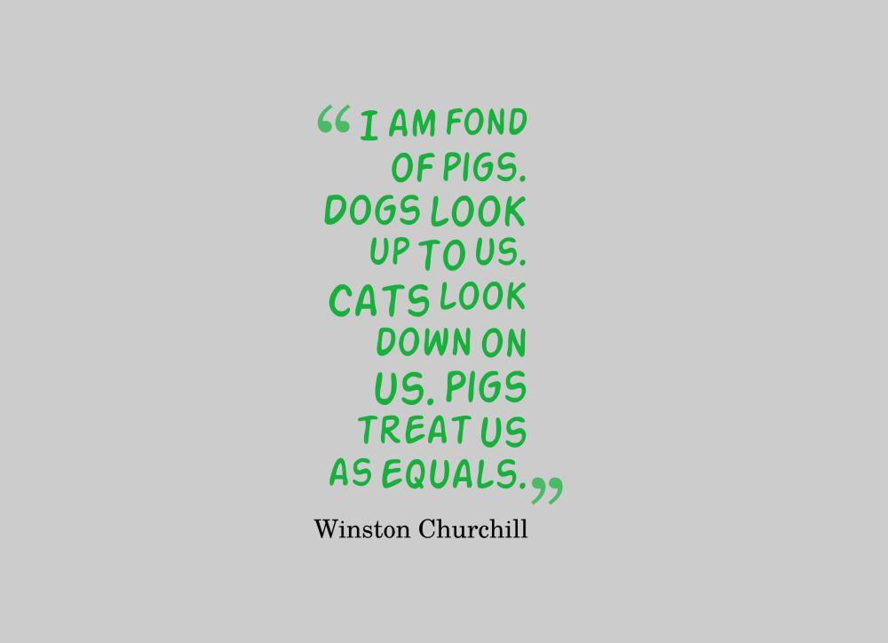 pig quote