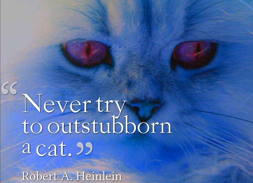 cat bath quote