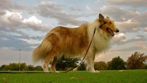 photo credit: dogsbylori via photopin cc