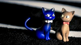 photo credit: Meow? Meow! via photopin (license)