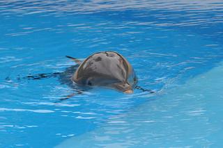 photo credit: Dolphin 4 via photopin (license)