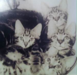 our cats