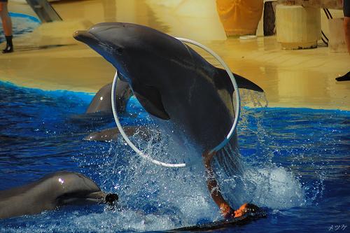 photo credit: Dolphin via photopin (license)