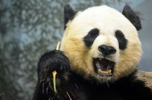 photo credit: National Zoo via photopin (license)