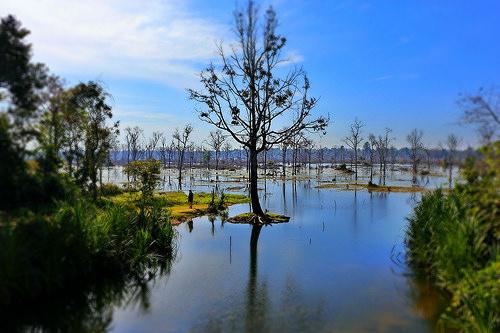 photo credit: angkor wat via photopin (license)