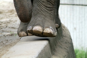 elephant-feet