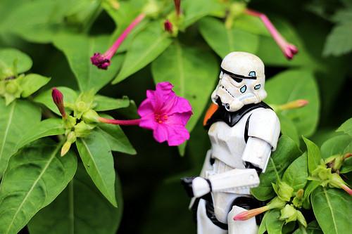 stormtrooper flowers