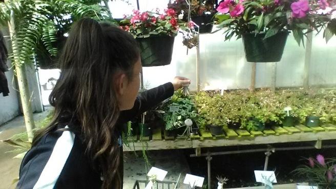 camdyn botany nursery plants