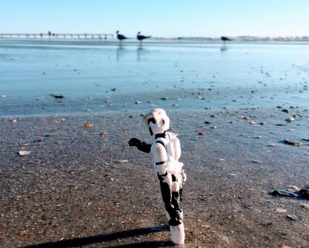 stormtrooper shells 2019 getaway neptune beach