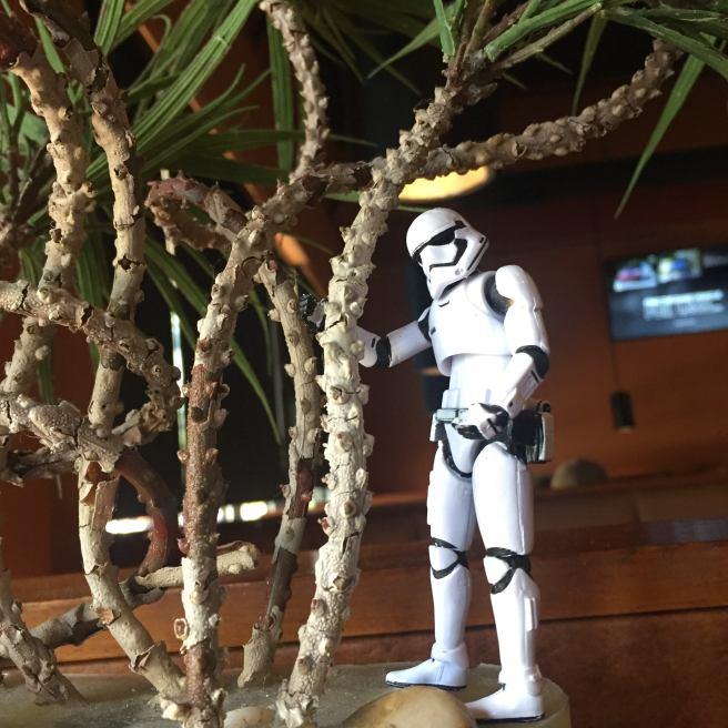 stormtrooper tree 2019 opportunity casa grande