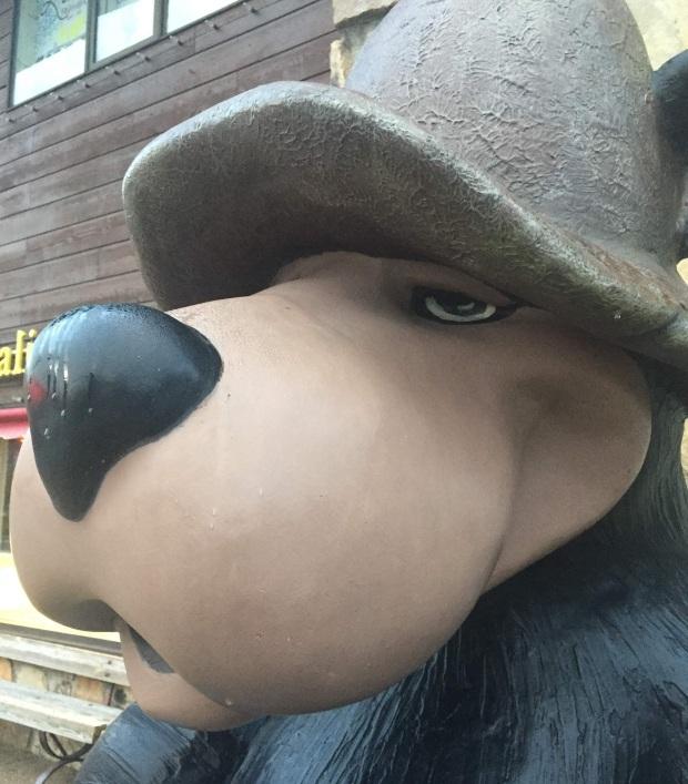 GT bear