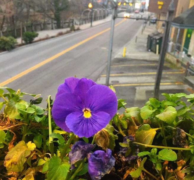 GT flower