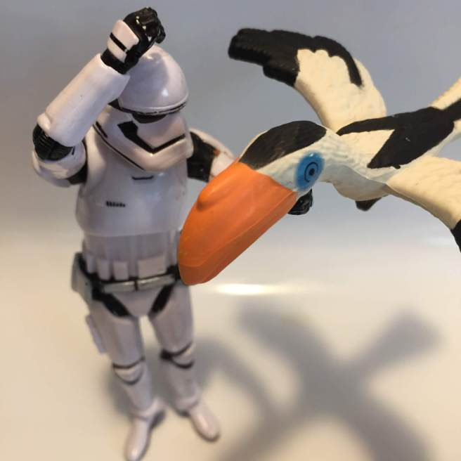stormtrooper toucan last week opportunity kitchen
