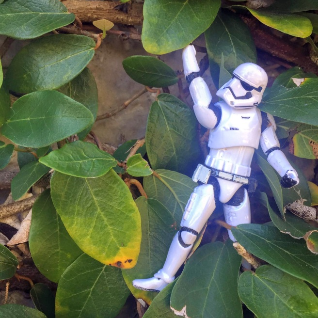 stormtrooper vine autumn wedding myrtle beach